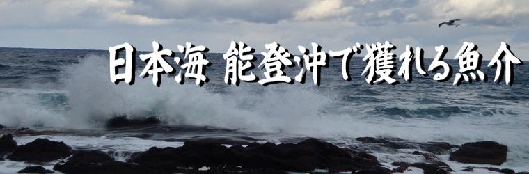 能登沖で獲れる魚介